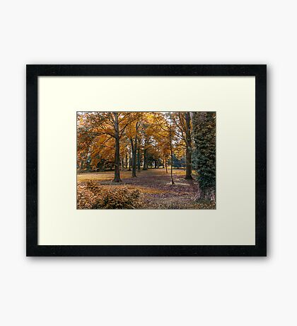 Autumn in the Woods Framed Print
