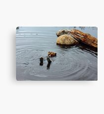 Grizzly Bear - Vancouver, BC, CANADA Canvas Print