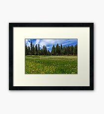 A Meadow In Lassen County Framed Print