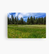 A Meadow In Lassen County Canvas Print
