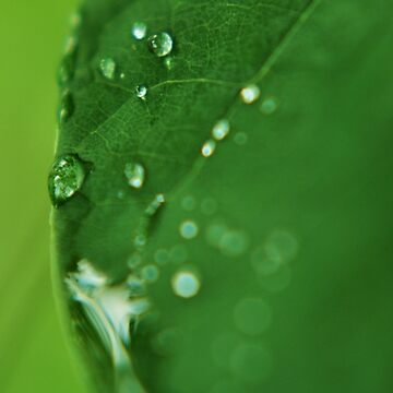 Green by berisme