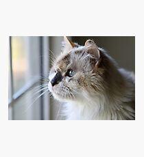 Lámina fotográfica Blue Eye Cat