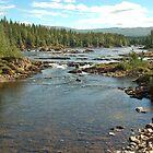 Anderdalen National Park - Norway by Arie Koene
