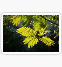 Graceful Lace - Spotlit Mimosa Leaves Sticker