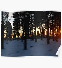 Sunset in the White Forest Poster