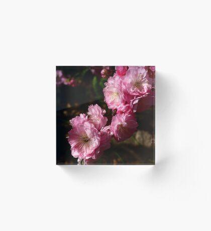 Spring Symphony Acrylic Block