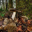 Wild Amanita Mushroom by Charles & Patricia   Harkins ~ Picture Oregon