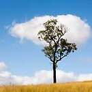 Tree Catches Cloud by David Haworth
