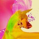 Scent Aura by Geckojoy