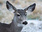 Deer Head by Yukondick