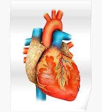 Front view of human heart. Poster