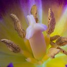 Tulip Macro by Steve Purnell