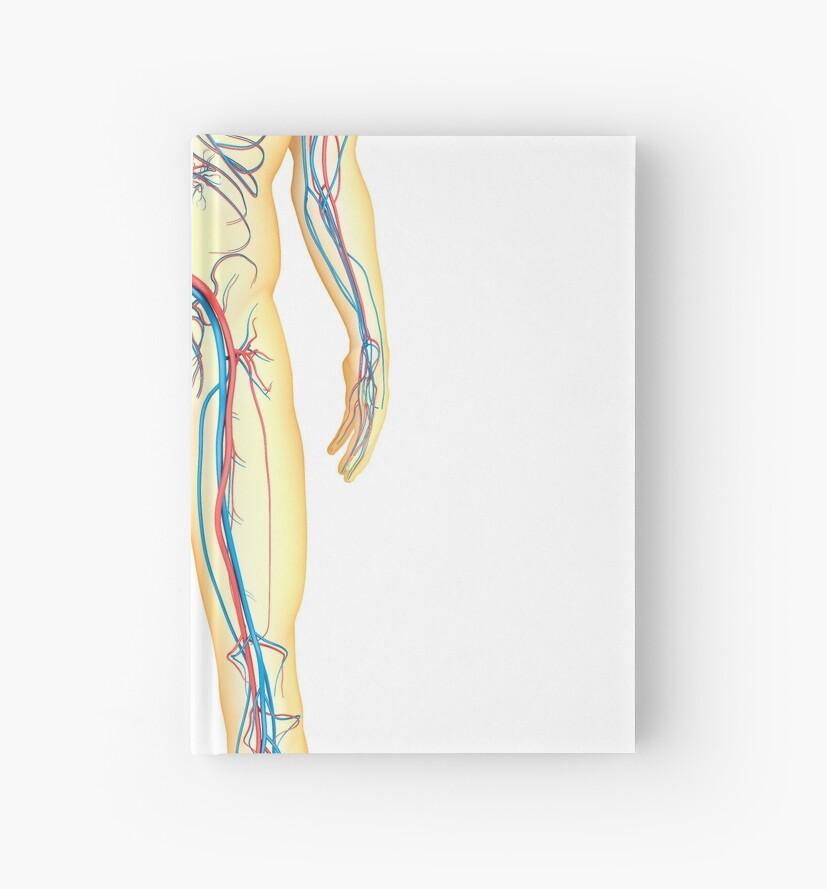 Cuadernos de tapa dura «Anatomía del cuerpo humano y el sistema ...