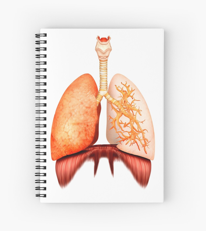 Cuadernos de espiral «Anatomía del sistema respiratorio humano ...