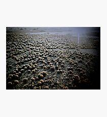 Sand Pellets  Photographic Print