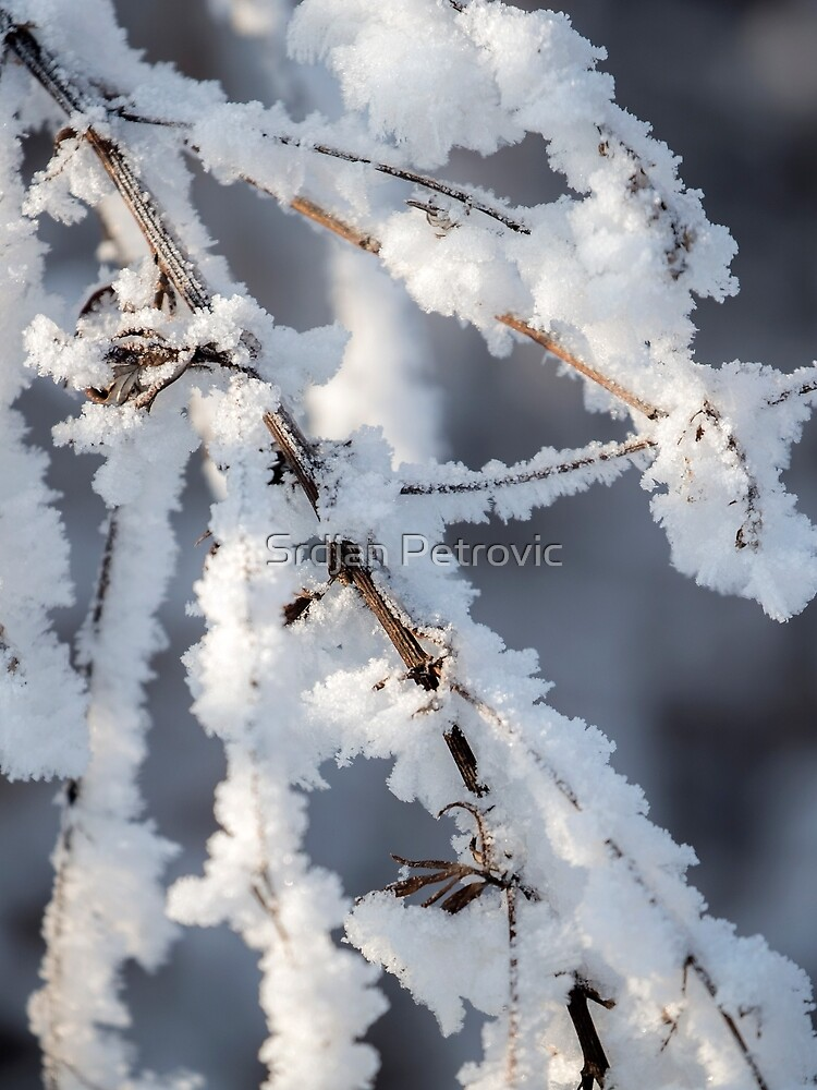 Snowy twigs  by Srdjanfox
