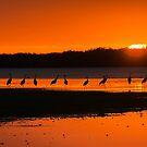 Sandhill cranes at dusk by Joe Saladino