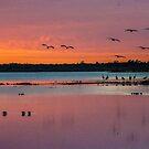 Sandhill crane sunset by Joe Saladino