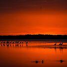 Last of the light by Joe Saladino