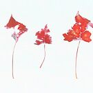 Somebody had Leaf for Lunch Trio - Red by Mike Solomonson