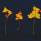 Somebody had Leaf for Lunch Trio - Yellow on Dark Background by Mike Solomonson