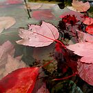 Floating Reds by Mike Solomonson