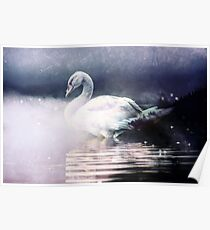 Forest Nature Animals - Swan Lake at Midnight Poster