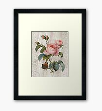 Rose Nostalgie Framed Print