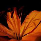 Shadow Print... by Linda Bianic