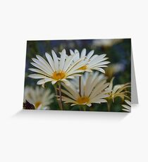 Pretty as a daisy Greeting Card