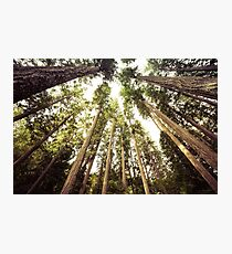 Forest Sky - The Canopy Photographic Print