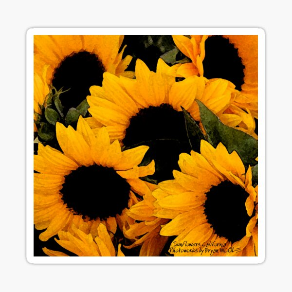Santa Barbara Sunflowers (2006) Sticker