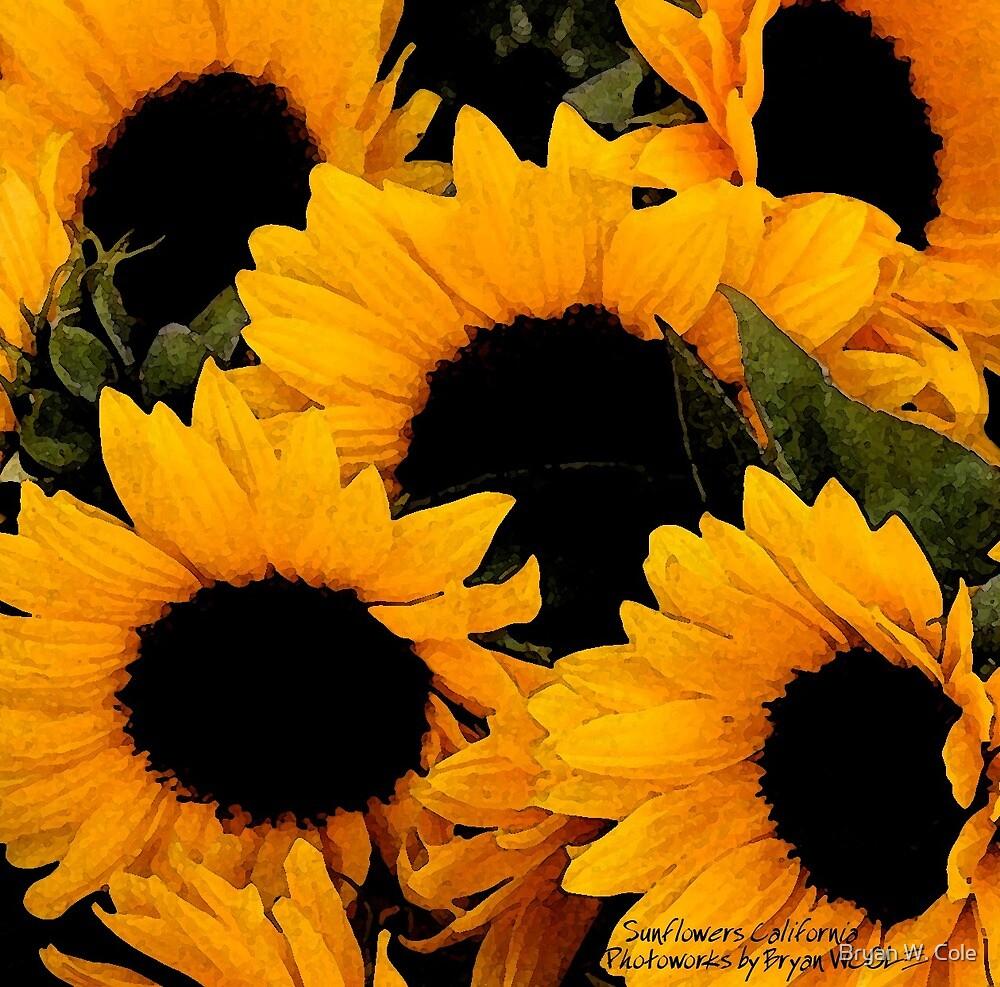 Santa Barbara Sunflowers (2006) by Bryan W. Cole
