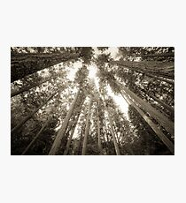 Forest Sky - Vintage Sepia Tree Sky Photographic Print