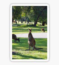 Kangaroo Golfers Sticker