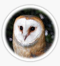 Bright Eyed Owl - Round Design Sticker