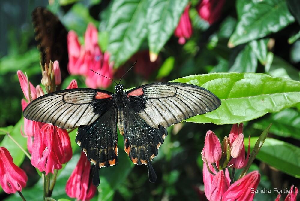 Butterfly Delight by Sandra Fortier