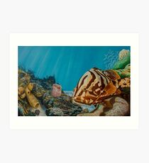 Surveying the Kingdom - Nassau Grouper Art Print