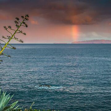 Ilhas Desertas by garethedward