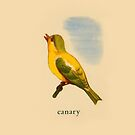 C is for Canary by dickybow
