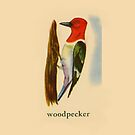 W is for Woodpecker by dickybow