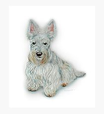Wheaten Scottish Terrier Photographic Print