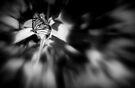 Schmetterling von Marianna Tankelevich