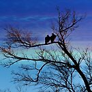 Two in a Tree by JohnDSmith