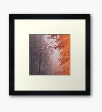 Forest Tree Mountain - Foggy Woods Framed Print