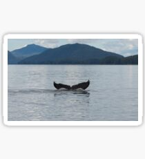 Humpback Whale Diving Sticker