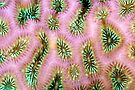 Coral polyp abstract by David Wachenfeld