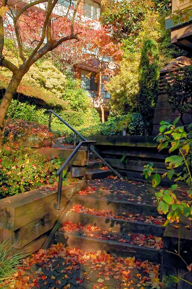 Up from Home, Autumn, Vancouver BC by Priscilla Turner