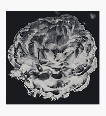Floral Flower Art - Retro Rose Black and White Vintage Flowers Photographic Print