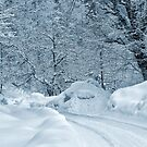 Winter Road by Svetlana Sewell